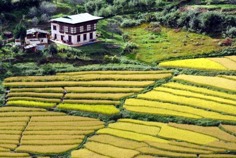 Bhutan Agro Tour