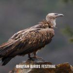 BHUTAN BIRD FESTIVAL TOUR